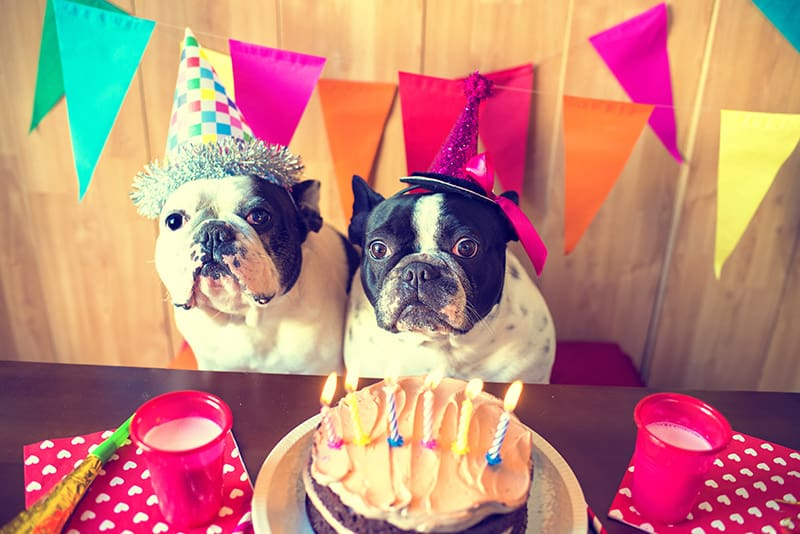 birthday-dogs